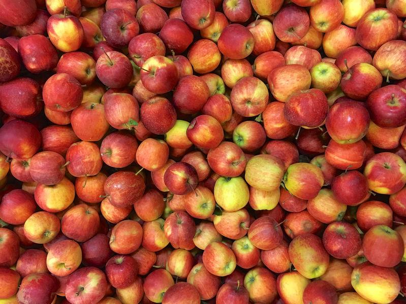 Apfel vom Bodensee