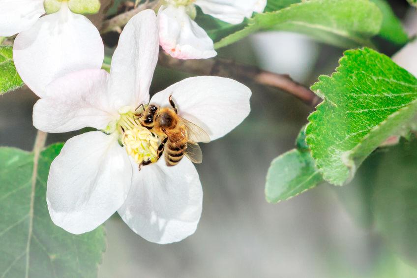 Biodiversität und Obstanbau