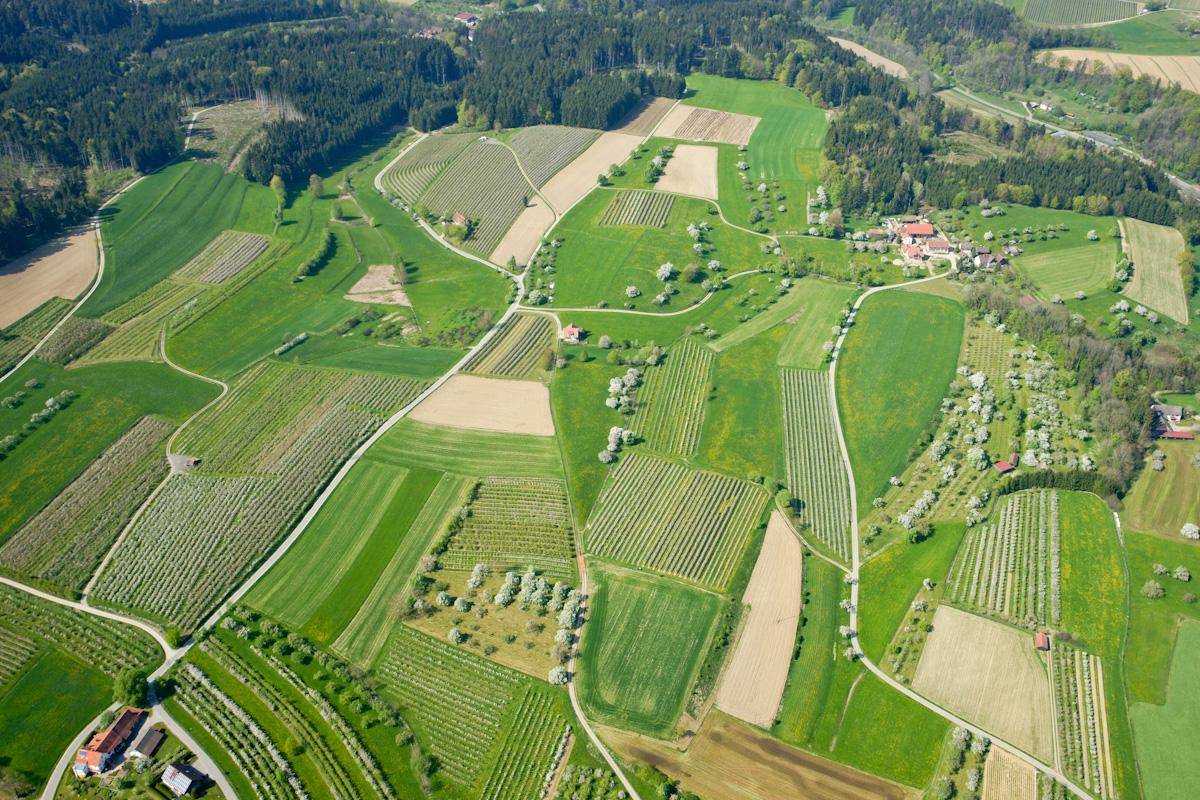 Obstanbau am Bodensee